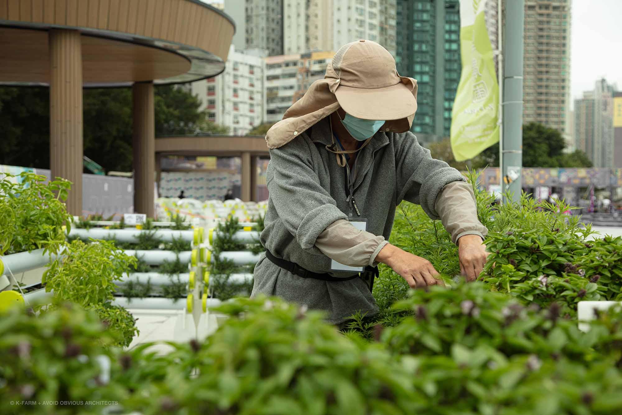urban farm, k-farm, smart farm, aoa, avoid obvious, architects, sustainable, landscape, urban planning, vicky chan, architect, designer, green design, green building, happy city
